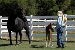 August_17_2007_Foal_Sandy