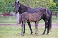 blackgold-9wks-blackstar