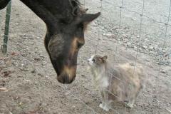blackgold-9wks-kitty