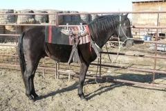 cc-and-saddle2