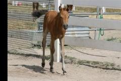 goldstar-2-weeks-old