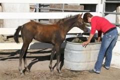 goldstar-4-weeks-old