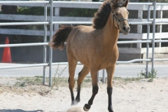 goldstar8mths-moving